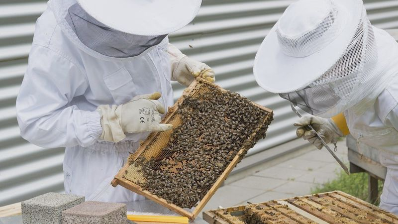 Beginning in January 2021, the University of Maine Cooperative Extension will host beekeeping...