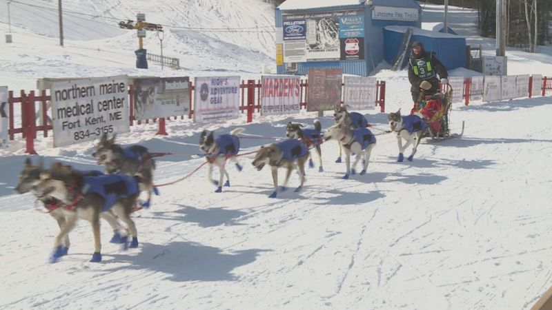 There won't be Sled dog races on Main Street in Fort Kent .