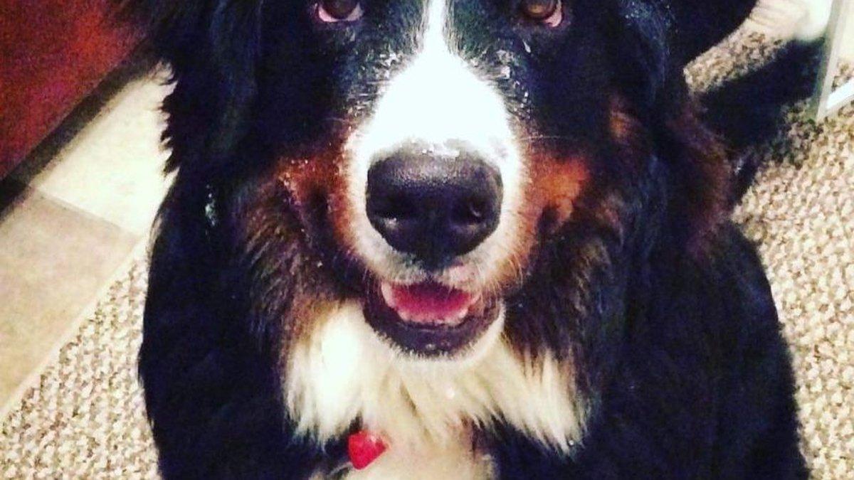 Truck Stolen With Dog Inside