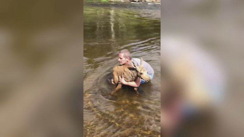 Cousins save baby moose in Allagash