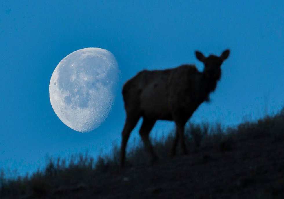 Light up your weekend: Watch for the full buck moon Friday night