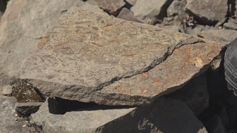 Fossils found in Northern Maine woods.