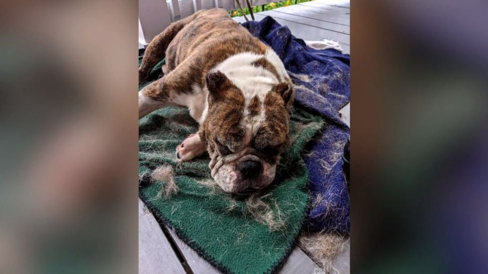 According to animal control, the dog rescued from the dumpster was full of milk and would have...