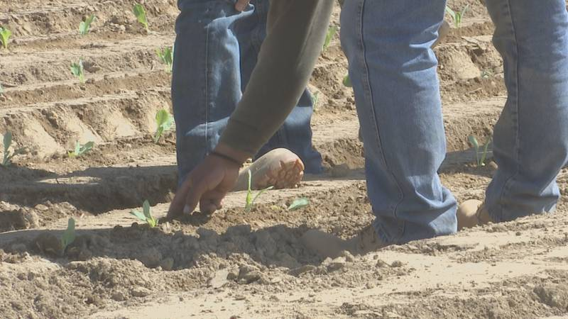 Importance of soil temperature when planting.