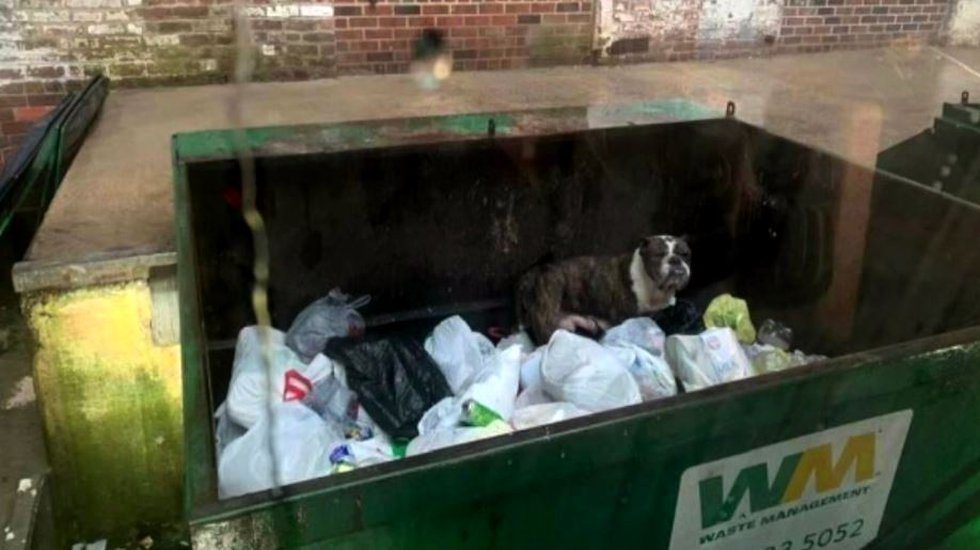 Jermaine Jackson, a Waste Management worker, was about to crush a dumpster's contents in his...